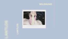LANTLOS – Wildhund